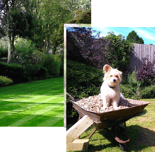 Landscape view of a Bristol garden with a scruffy Jack Russell lying down