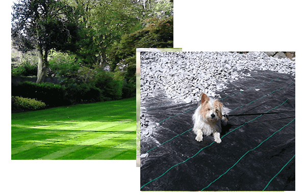 A landscape view of a Bristol garden maintained by Bristol gardener Bark and Gardens and an image of a scruffy Jack Russell lying down