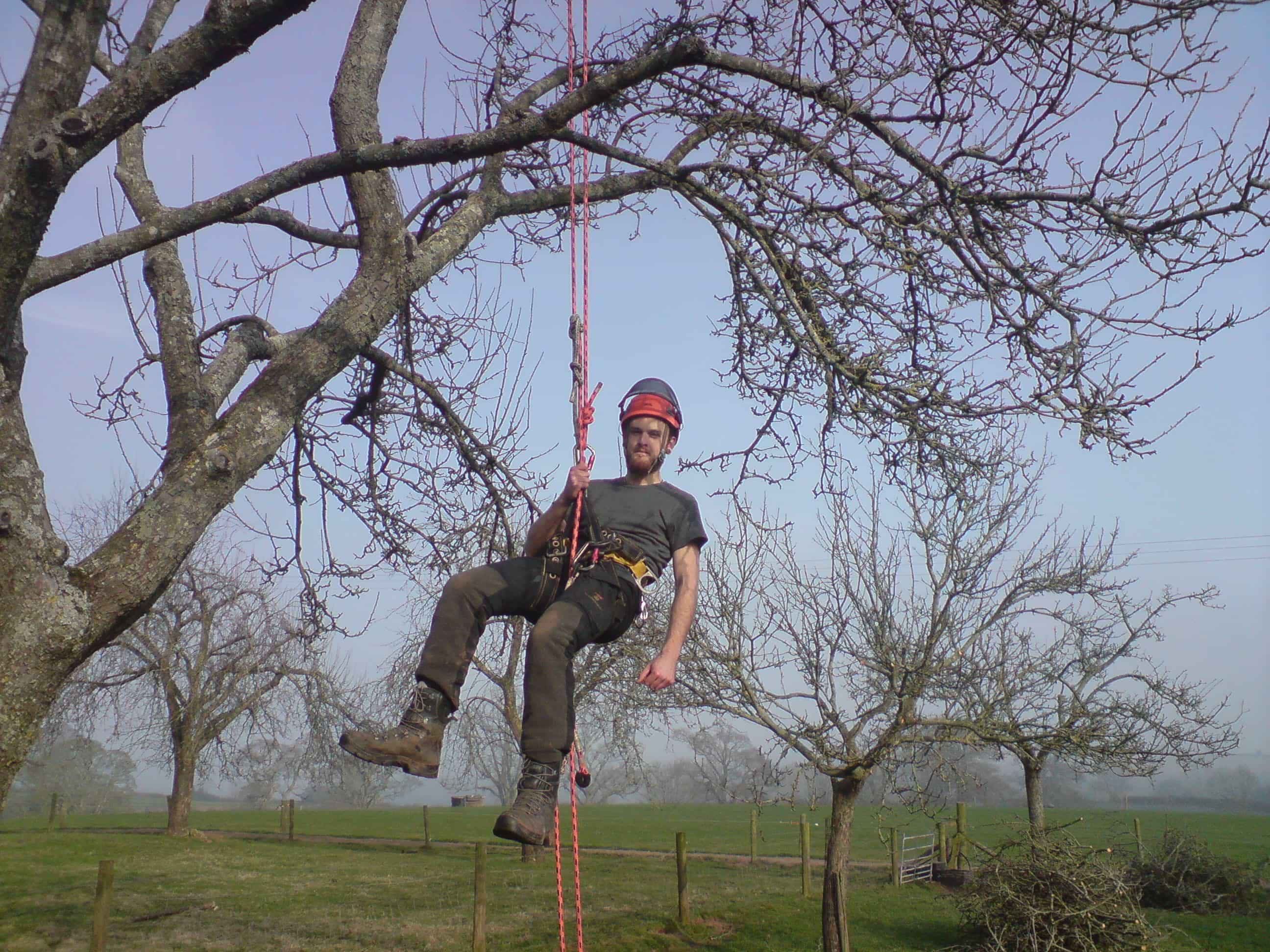 Tree surgeon work taking place in Bristol by Bristol gardener Bark and Gardens
