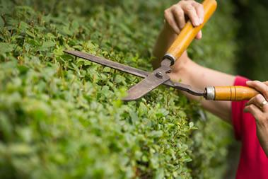 Example of hedge cutting work by Bristol gardening company Bark and Gardens