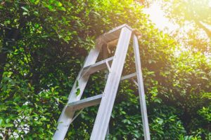 Pruning and Dead Heading Gardening Services in Bristol