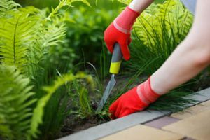 Weed Controlw Services from Bristol Gardening Company