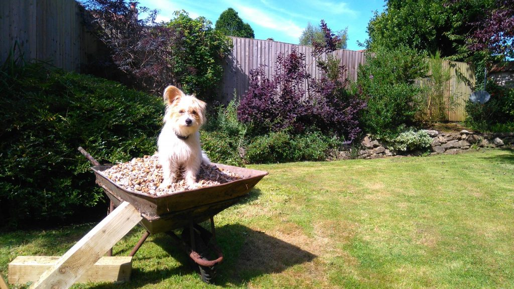 Find out more about Bristol gardening company Bark and Gardens