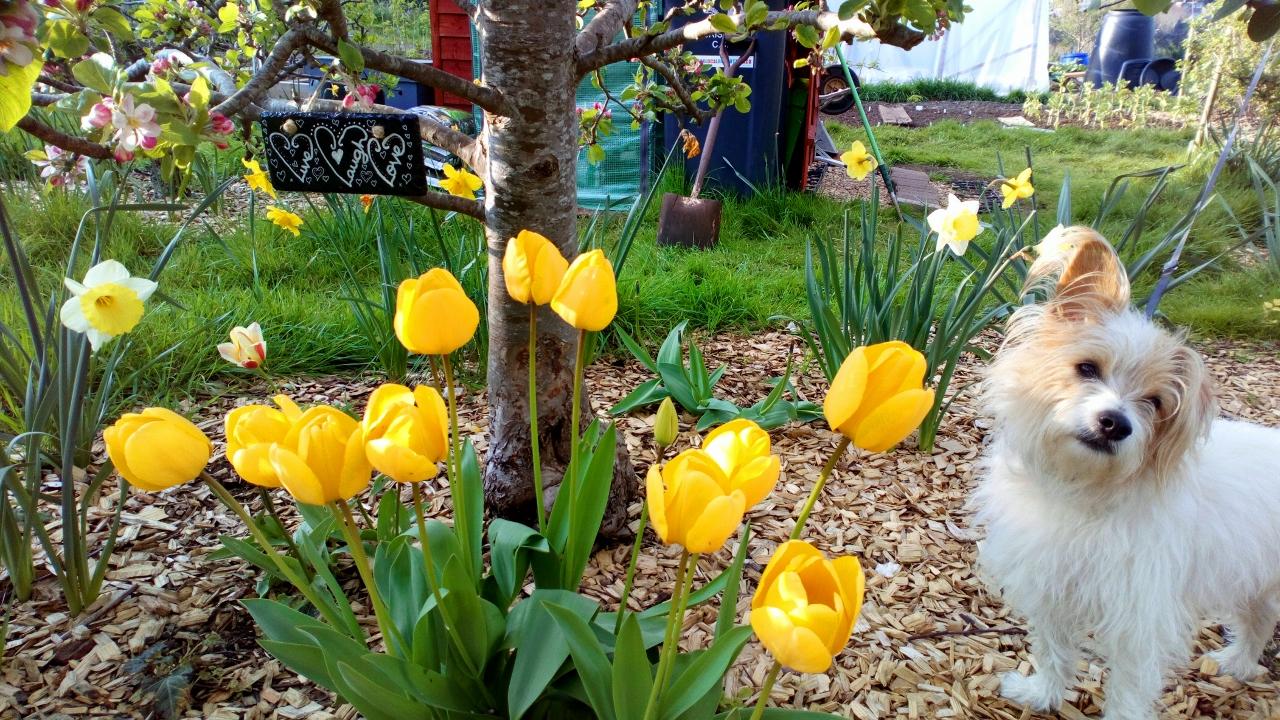Spring bulbs (1280×720)