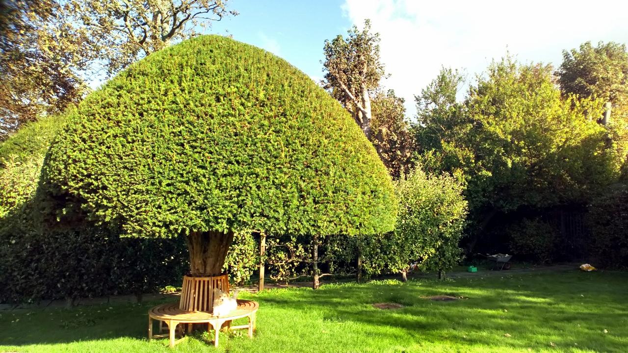 Topiary (1280×720)